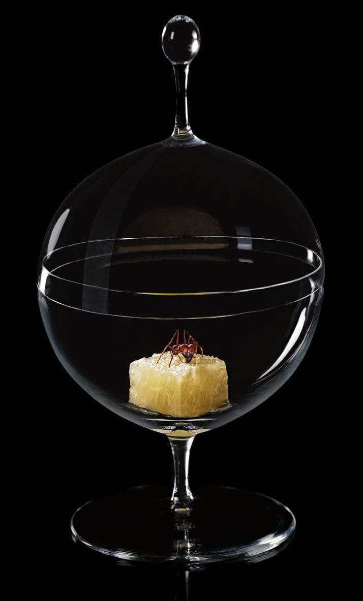 Candy Dish Alex Atala Phaidon sergio coimbra 1 Lobmeyr   the perfect balance of shape and function.