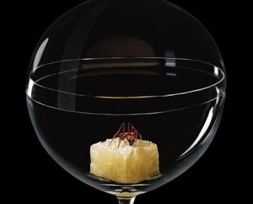 Candy Dish Alex Atala Phaidon sergio coimbra 2 495x400 Lobmeyr